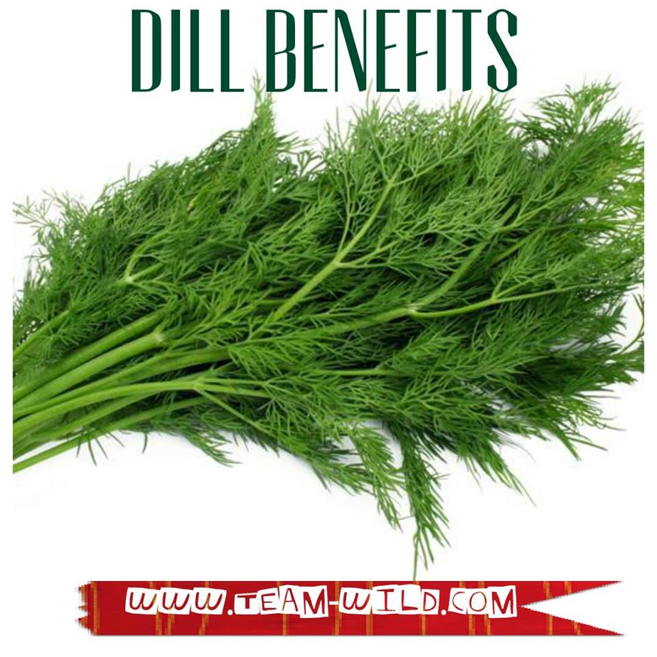 Dill | One Amazing Herb Not to be Missed from Your Daily Diet