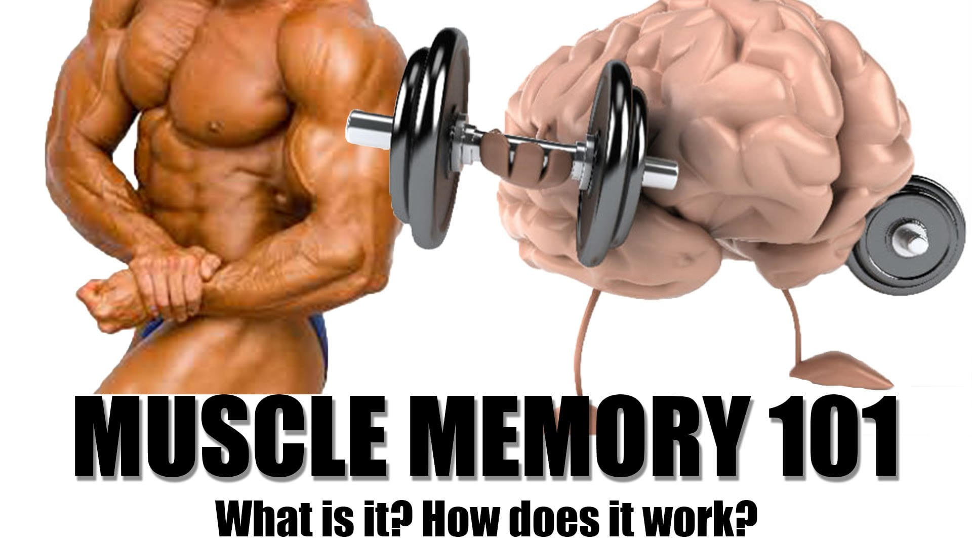 What is muscle memory