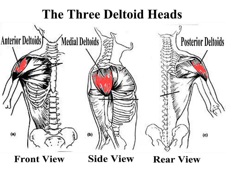 Protected: Team Wild Online Coaching – Training Your Shoulder Muscles (Deltoids/Delts)