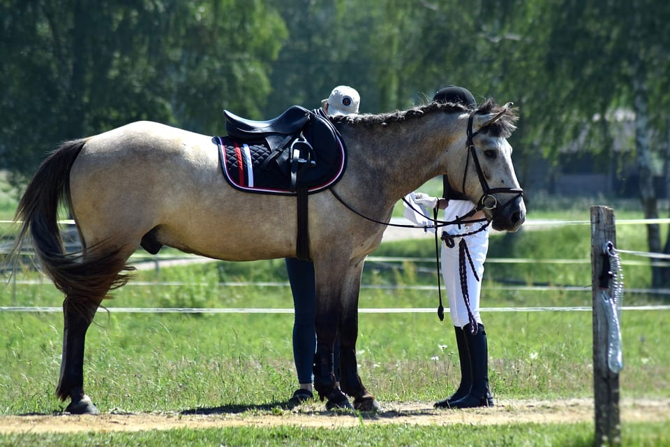 All You Need To Know About Horse Riding And Fitness ...
